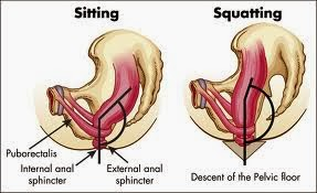 Sit vs Squat close.jpg